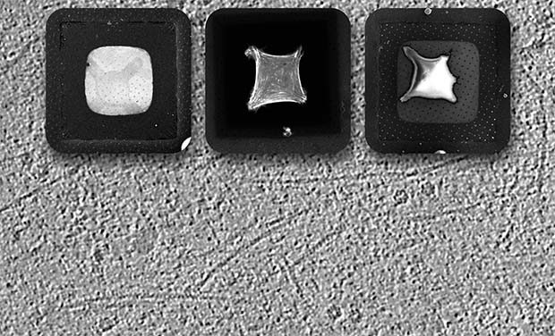 Cryo-ET and micropatterning