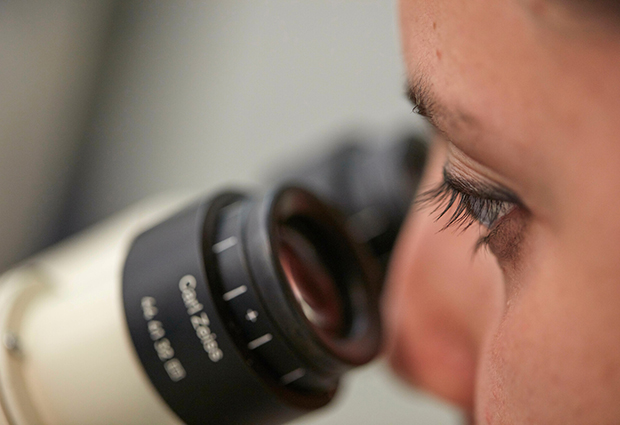 Phd student microscope
