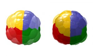 A 4D visualisation of single-cell expression patterns. Credit: Hanna Sladitschek/EMBL