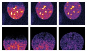 Micropilot detected cells at particular stages of cell division