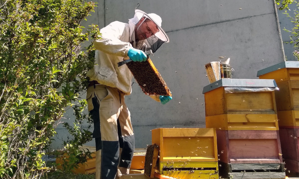 Beekeeper checking one of the hives near the Adacned Training Centre at EMBL Heidelberg.