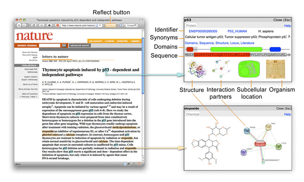 Reflect applied to a pubmed webpage. Protein names found in the text are highlighted in blue, chemicals in orange. Pop-up windows provide extra information on the biomolecules.