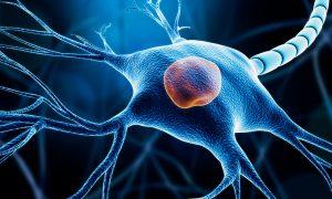 stem cells neurons differentiation