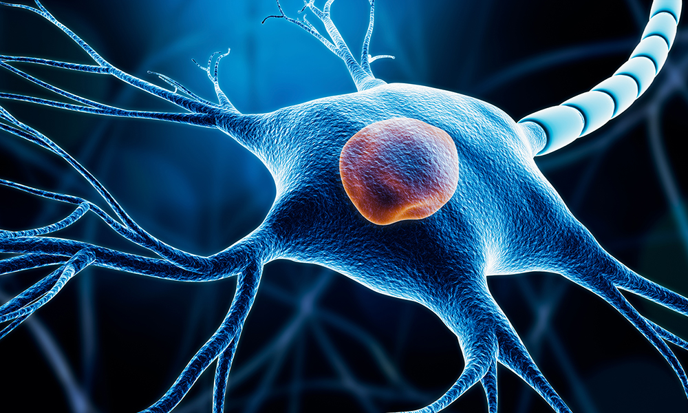 stem cells neurons differentiation