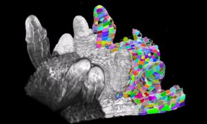 3D image of plant cells. The ones identified by the algorithm are brightly coloured.