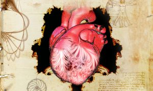 A human heart sits at the centre of the illustration. The left ventricle is see-through, showing patterns of trabeculae. Around the heart are some notes from Leonardo da Vinci.