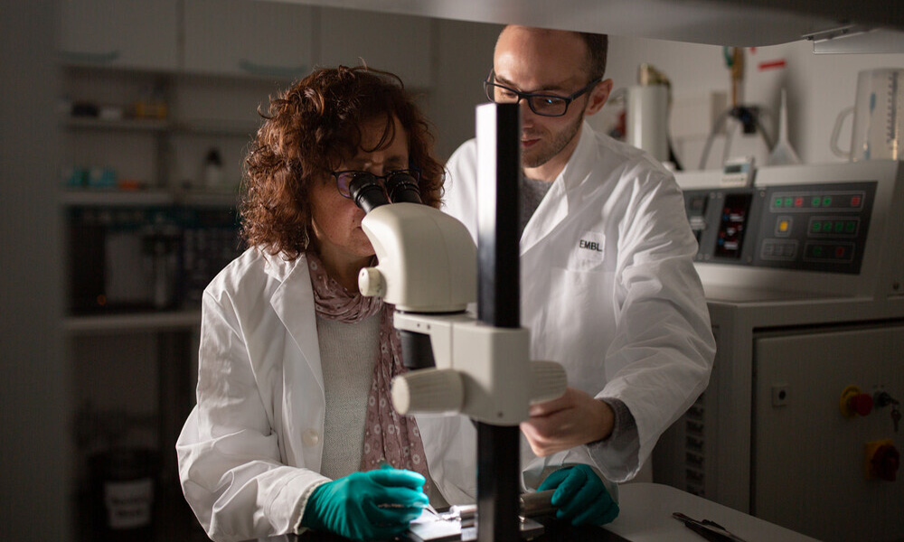 Two researchers at EMBL's state-of-the-art Electron Microscopy Core Facility (EMCF). A female scientist is using a binocular microscope, a male scientist is standing next to her.