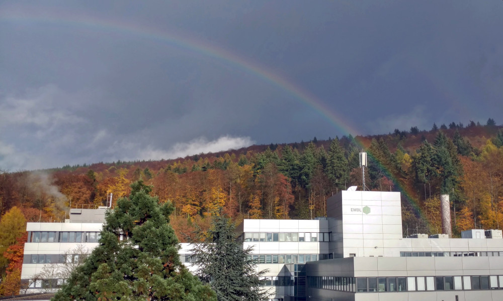 Rainbow above the EMBL building in Heidelberg, surrounded by woods.
