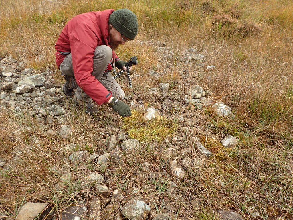 David Bell collecting Campylium stellatum.