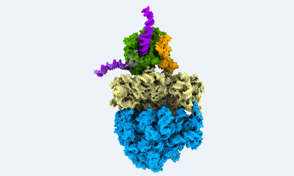 A bacterial cell with the parts needed for information flow from DNA to messenger RNA to protein highlighted in different colours.