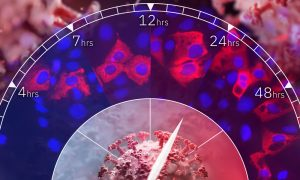 Microscopy images of coronavirus-infected cells in blue and red, arranged on a clockface. Illustrations of virus particles.