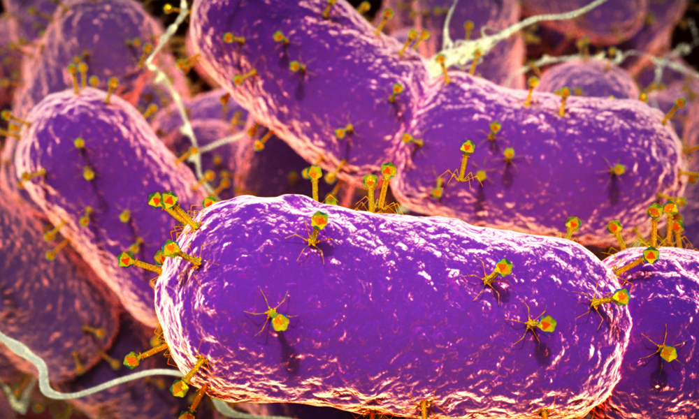 Phages invading gut bacteria.