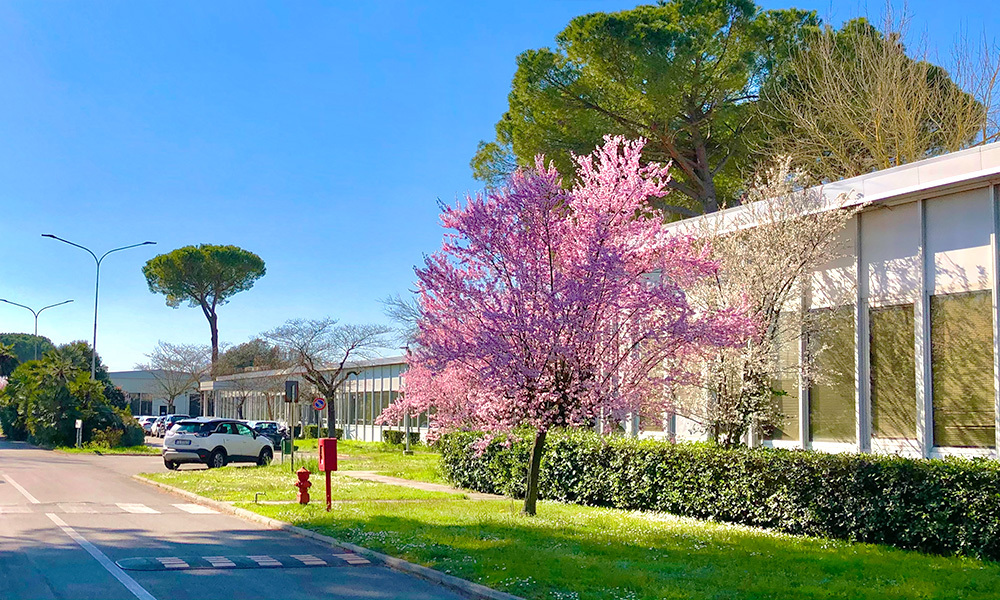 Pink blooming tree in front of functional building.
