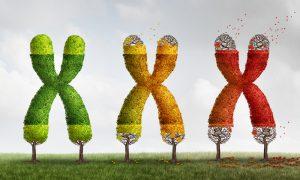 Genetics of ageing