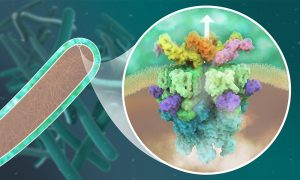 A close up into the inner membrane of a mycobacterium shows a 3D model of the molecular structure of the mycobacterial secretion system ESX-5, which is located in the inner membrane and consists of multiple proteins shown in different colours.