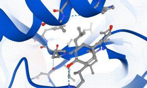 Protein structural biology