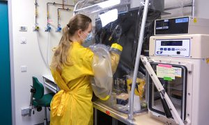 Female scientist working at a biosafety cabinet, wearing a yellow protective gown and black gloves.