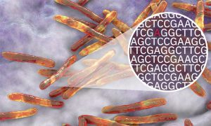 Tuberculosis bacteria with a zoom in to represent the bacterial genome and mutations in the genome