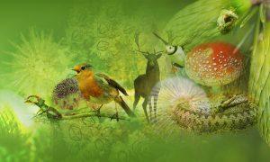 Several species including robin, mushroom, deer on green background.